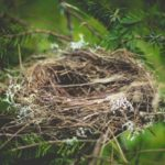 Unsplash Nest