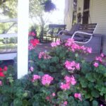Geraniums and Endurance